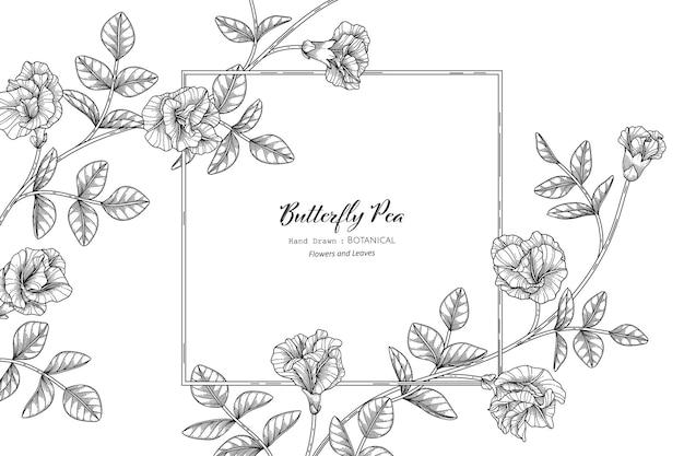Бабочка горох цветок и лист рисованной ботанические иллюстрации с линией искусства.