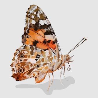 나비 사실적인 손으로 그린 일러스트 및 벡터