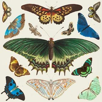 Vettore della raccolta di clipart dell'annata della farfalla