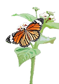 나비 수채화 그리기