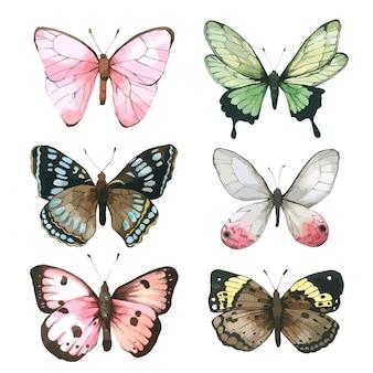 蝶の水彩、グリーティングカードのために描かれた蝶の手のセット