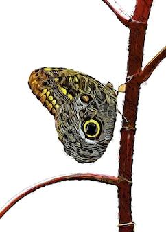 木の枝に立っている蝶の水彩画