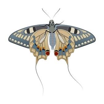 흰색 배경에 고립 된 꼬리와 나비. 아래에서 볼 수 있습니다. 아름다운 패턴과 뒷면에 얇은 꼬리가있는 큰 날개. 벡터 eps10입니다.