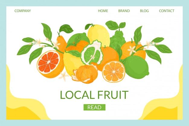 柑橘類のローカル着陸のイラスト。クローズアップ組成新鮮なトロピカルフルーツ。熟したジューシーなグレープフルーツ、甘いオレンジ、サワーレモンの天然抗酸化物質。健康を改善するためのビタミンc。