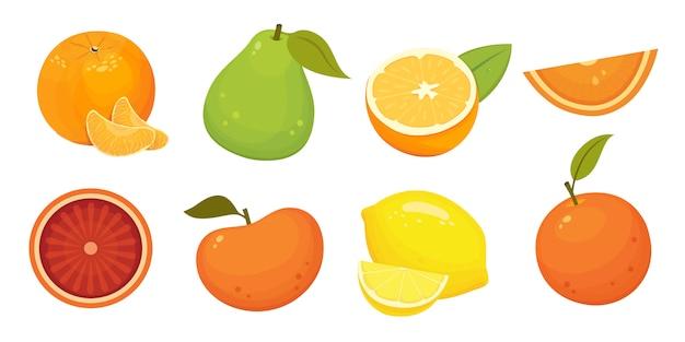 みかん、グレープフルーツ、オレンジ、ザボンと新鮮な柑橘系の果物のイラストを分離しました。ビタミンcの概念。