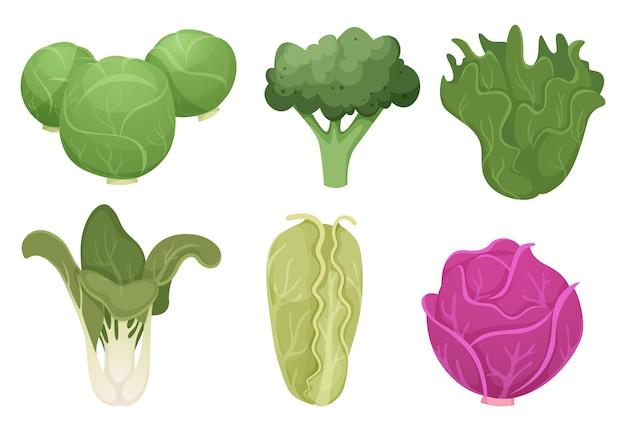 キャベツの漫画。緑のきれいな野菜エコ食品新鮮な庭のブロッコリーおいしい農場の料理のベクトル。イラスト新鮮な野菜、自然農法、菜食主義の成分