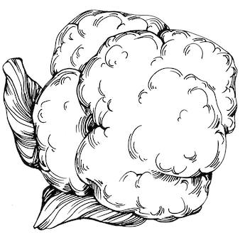 キャベツ手描きスケッチベクトルイラスト。孤立した野菜の彫刻スタイルのオブジェクト。デザインのロゴ、メニュー、ラベル、アイコン、スタンプに最適です。ヴィンテージスタイル。