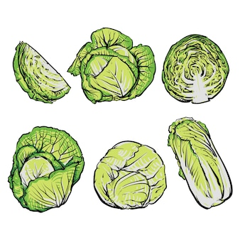 Cabbage hand drawn illustrations set, isolated vegetable engraved style objects