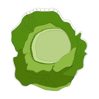 Капуста изолированных иллюстрация vactor. концепция питания. креативный дизайн. овощи, здоровые органические.