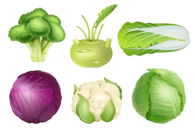 Набор капусты. зеленое питание сельскохозяйственных объектов вегетарианская пища натуральные здоровые свежие продукты реалистичные фотографии коллекции. капуста вегетарианское питание, иллюстрация сырых свежих ингредиентов