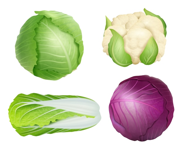 Капуста. вегетарианские свежие здоровые продукты питания природа растения сельскохозяйственные ингредиенты зеленый салат вектор реалистичные иллюстрации. ингредиенты для капусты, свежие овощи, натуральное сельское хозяйство Premium векторы