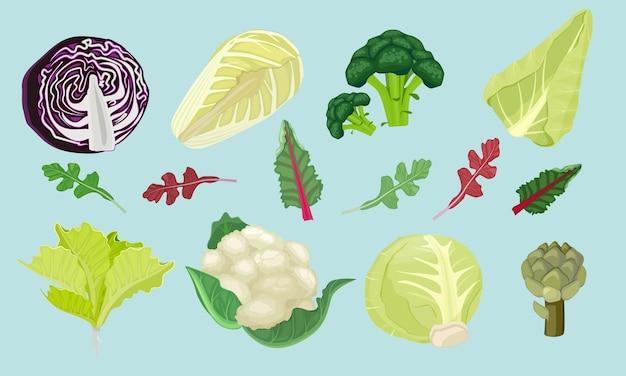 キャベツ。菜食主義者のための緑の自然な健康食品収穫機春の製品漫画イラスト。カリフラワーとキャベツ、サラダナチュラルオーガニック