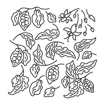 Cacao art line set abstract tree leaf fruit bean flower hand drawn simple sketch