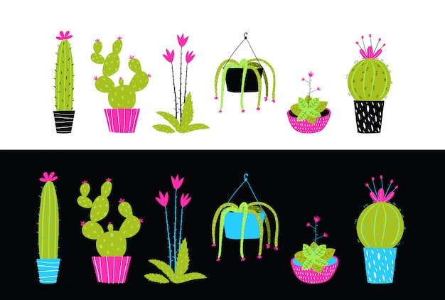 Cacti cactus and succulent flowers interior collection.