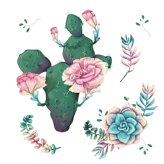 Cacti hand drawn on a white background.