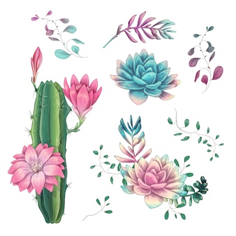 Cacti hand drawn on a white background
