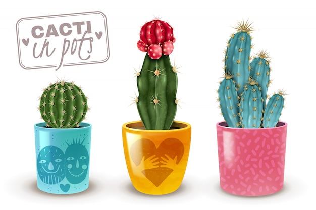 分離された3つの人気のある簡単なケア観葉植物のクローズアップのカラフルな装飾的なポット現実的なセットのサボテン