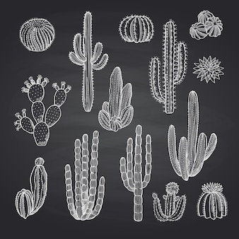 Cacti plants set on chalkboard