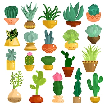 Cacti succulents in pots set