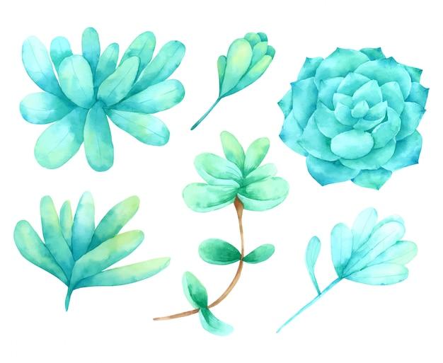 선인장과 즙이 많은 요소 손 페인트 수채화 컬렉션 디자인
