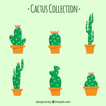Cactus collection of six