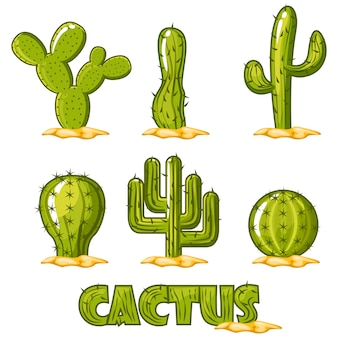 Cactus collection vector