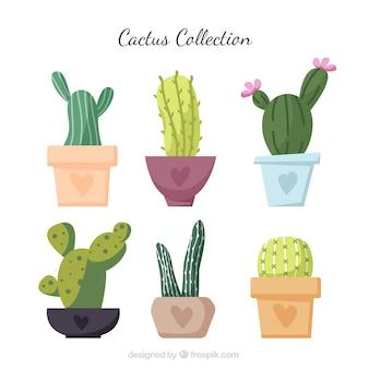 Collezione cactus con stile colorato