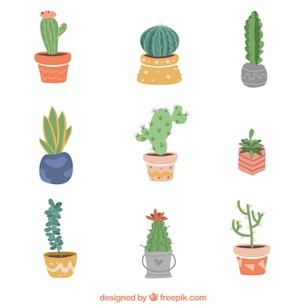 Cactus collection with flat design
