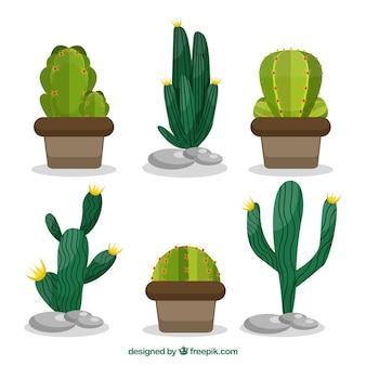 Коллекция кактусов с тропическим стилем