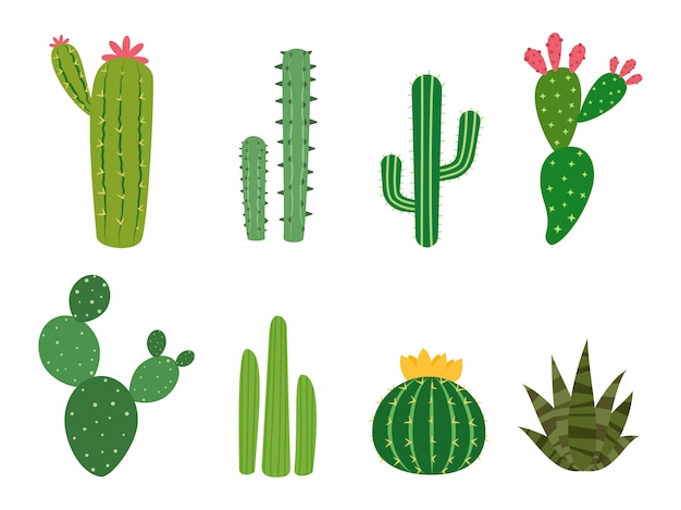 Cactus collections vector set