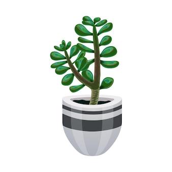Composizione in cactus con immagine isolata della pianta di giada in vaso di fiori su bianco