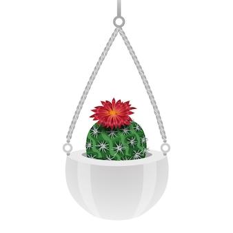 Composizione di cactus con immagine isolata di cactus parodia in vaso appeso su bianco