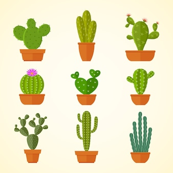 Cactus decorative home plant in pots flat  icons.