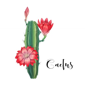 Cactus in desert vector and illustration