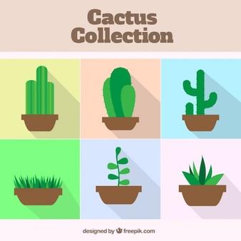 Cactus flat design collection