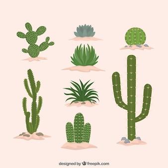 Cactus flat design collection Premium Vector