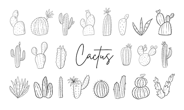 Cactus hand drawn line art illustration big set