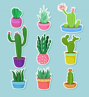 Cactus home plants in pots with flowers set, variety of decorative cacti stickers   illustrations
