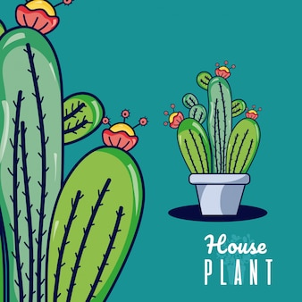 선인장 집 식물