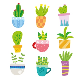 Cactus illustrations collection