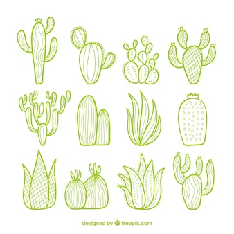 Cactus pack with hand drawn style