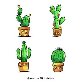 Cactus pack