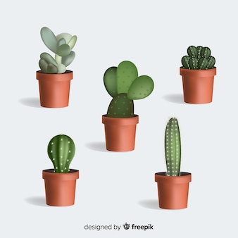Cactus plant in realistic style