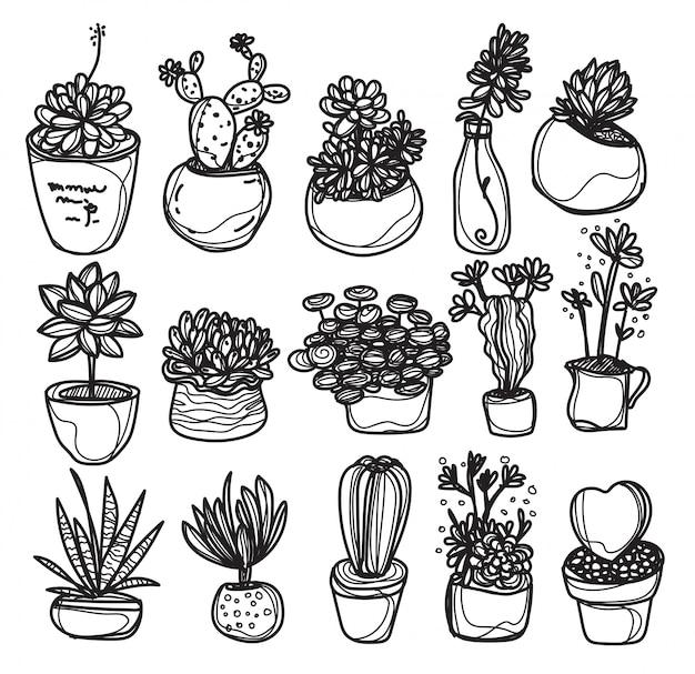 Cactus plants nature elements hand drawn