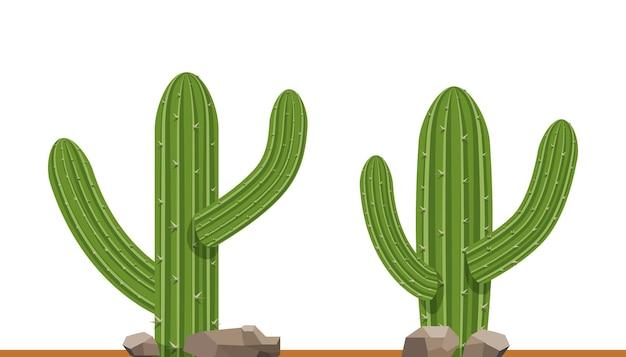 흰색 배경 그림에 선인장 식물입니다. 녹색 절연 선인장 세트입니다.