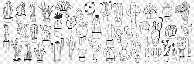 Cactus in pots doodle set. collection of hand drawn various cactus plants in pots for home growing isolated.