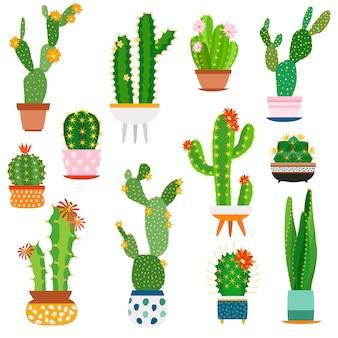 선인장 냄비. 세라믹 냄비 즙이 많은 식물, 가시 나무 식물 정원 선인장에 홈 식물 선인장 꽃
