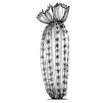 Кактус эскиз черно-белые старинные гравюры