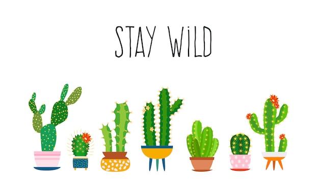Cactus. succulents cactus exotic cactuses plants sketch trendy typography slogan