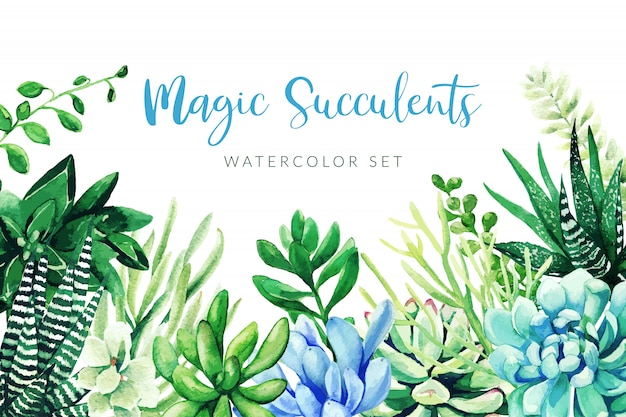 Cactus and succulents plants, horizontal background, hand drawn